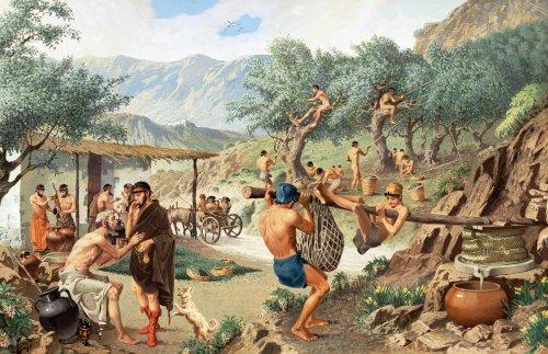 Gregos produzindo óleo de oliva. Ilustração moderna, autor desconhecido.